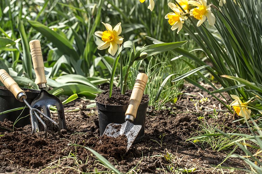 Cuidado del jardín flores